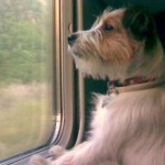 cane-treno-578811-660x368