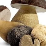 funghi-e-tartufi